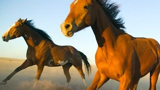 18 Amazing Facts About Horses