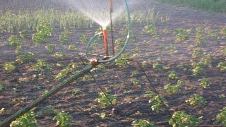 видео Как организовать полив огорода на даче правильно