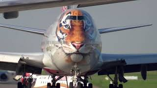 Боинг 747 с мордой тигра / Аэропорт Внуково - Тигролет