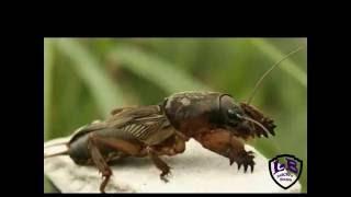 ЖУК, МЕДВЕДКА и МОХНАТАЯ ГУСЕНИЦА. Этот удивительный мир вокруг нас!(Артем на даче познает окружающий мир. Он нашел красивого большого жука, красивую мохнатую гусеницу и огромн..., 2016-06-26T18:47:27.000Z)