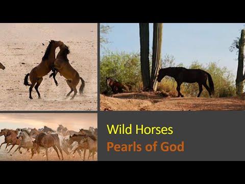 Beautiful Wild Horses running free and wild - YouTube - photo#49
