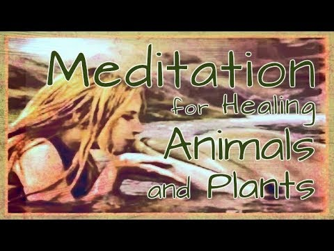 Meditation for Healing Animals and Plants - English