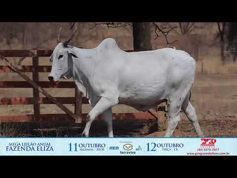 LOTE 205