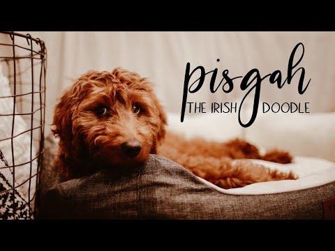 Pisgah | The Irish Doodle | Full Time RV Doodle