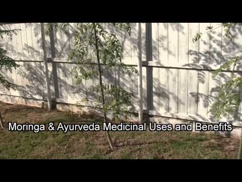 Moringa Tree Dallas Texas 1st Update 2014