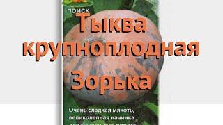Тыква крупноплодная Зорька (zorka) 🌿 тыква Зорька обзор: как сажать семена тыквы Зорька