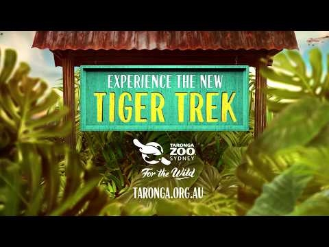 Step into Sumatra at Taronga Zoo's new TIGER TREK
