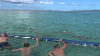 EcoTour - Bora Bora - Polinesia Francese 07/2011 - Con gli squali