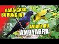 Burung Burung Paling Ambyarr Di Aviary Yang Sudah Jadi Hutan Mini Ini  Mp3 - Mp4 Download