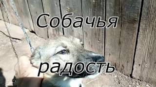 Собачья радость - Отпускаю собаку с цепи во дворе дома