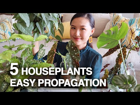 PROPAGATE WITH ME & GROW YOUR PLANT COLLECTION FOR FREE! | 5 EASY HOUSEPLANTS PROPAGATED BY CUTTING