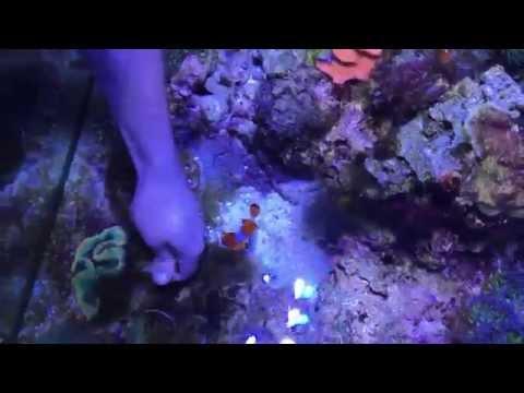 Clownfish Bite! Not So Nice NEMO