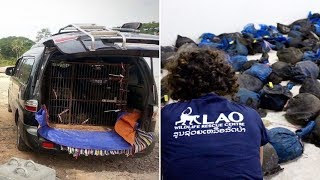 Police In Laos Stopped Two Suspicious Vehicles And Found The Most Heartbreaking Cargo Inside