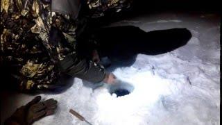 Ловля судака зимой на жерлицу, ночью.