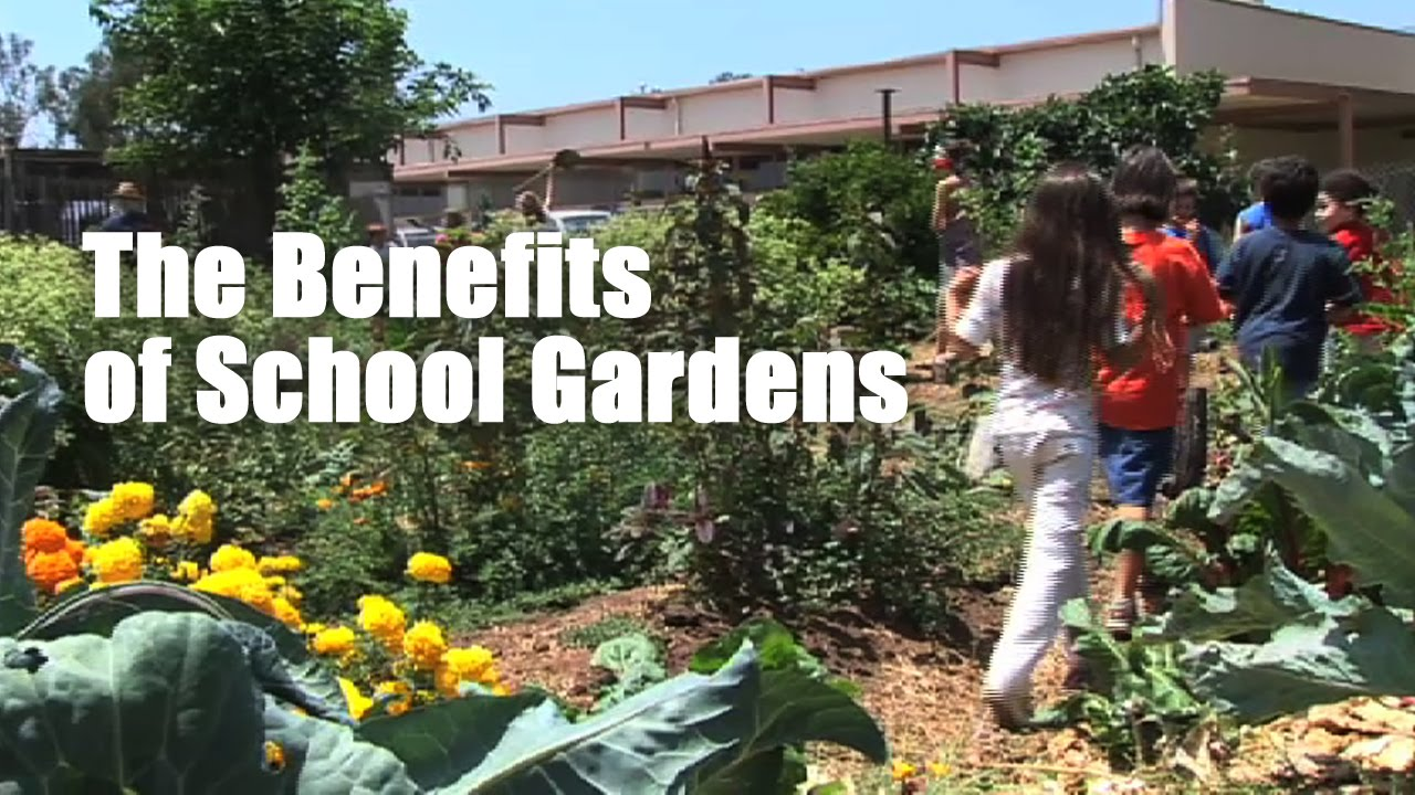 the benefits of planting your own garden Starting a home vegetable garden comes with many benefits - including saving you money see this step-by-step guide on how to plant your garden this season.
