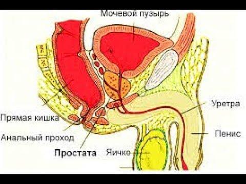 Лечение кандидозного простатита тибетское лекарство от простатита