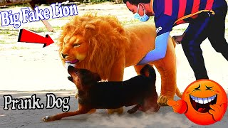 Big Fake Lion vs Real Dogs Prank Very Funny Surprise Scared Reaction - Try Not To laugh