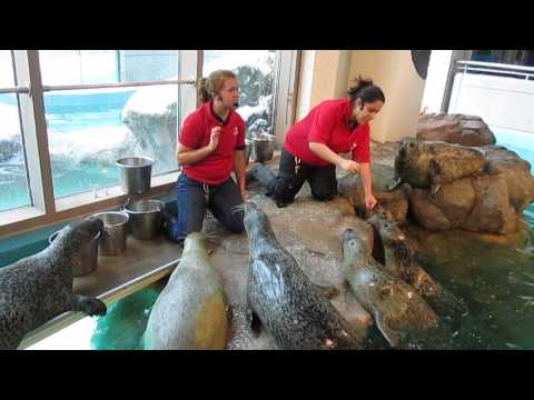 Playtime with the seals at Norwalk Maritime Aquarium - December 14, 2013