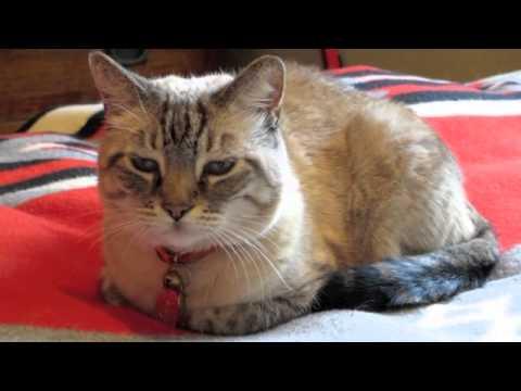 Animal Communicator / The Pet Psychic Laura Stinchfield Meets Old Animal Friends