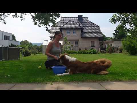 Anleitung: Hund lernt aufräumen / Hund lernt etwas an einen bestimmten Ort zu apportieren