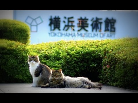 横浜美術館の猫 The cat of Yokohama Museum of Art