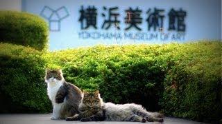 横浜美術館の猫 The cat of Yokohama Museum of Art