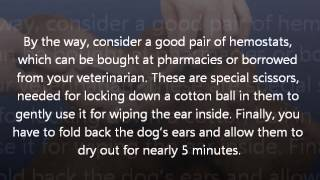 How to Clean Dog