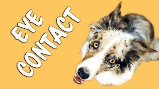 Fastest and easiest way to train EYE CONTACT - Dog training