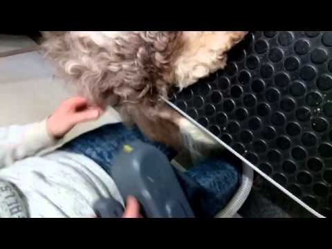 Brushing a matted tail with the ADB