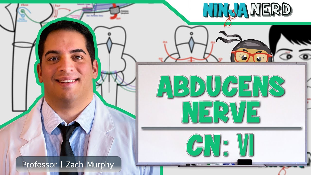 Neurology | Abducens Nerve | Cranial Nerve VI - YouTube