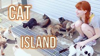 CAT ISLAND in Japan! 猫島 (宮城県) Tashirojima thumbnail