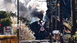 2020年干支マーク日章旗SL列車走る! C11-312復元保存発表❣ 機関車トーマス