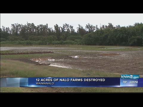 Nalo Farms devastated by flooding