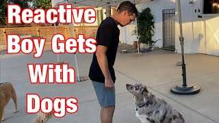 Watch me correct after dog growls//What to do so your reactive dog isn't aggressive