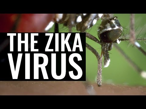 Zika Virus, Dengue and the Yellow Fever Mosquito - Professor Chris Whitty and Professor Francis Cox