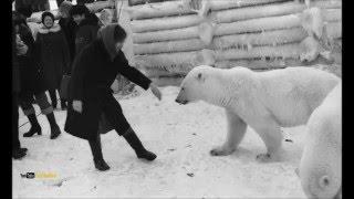 Белые медведи в поселке Амдерма. Архивные фото