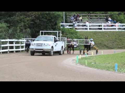 #2 Harness Pony Racing Bermuda November 13 2011