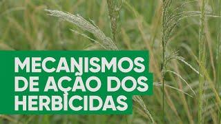 Mecanismos de ação dos herbicidas