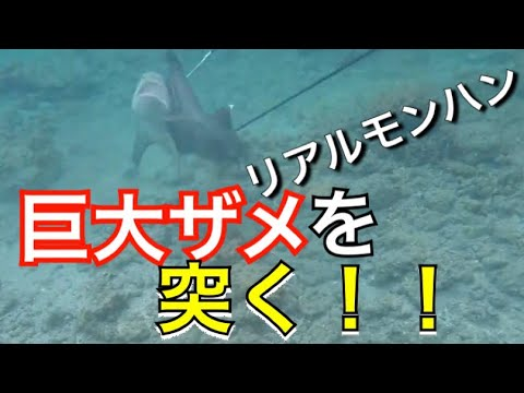 【魚突き】リアルモンスターハンター !巨大ザメを4人で狩る!【解説実況付き】【サメ】