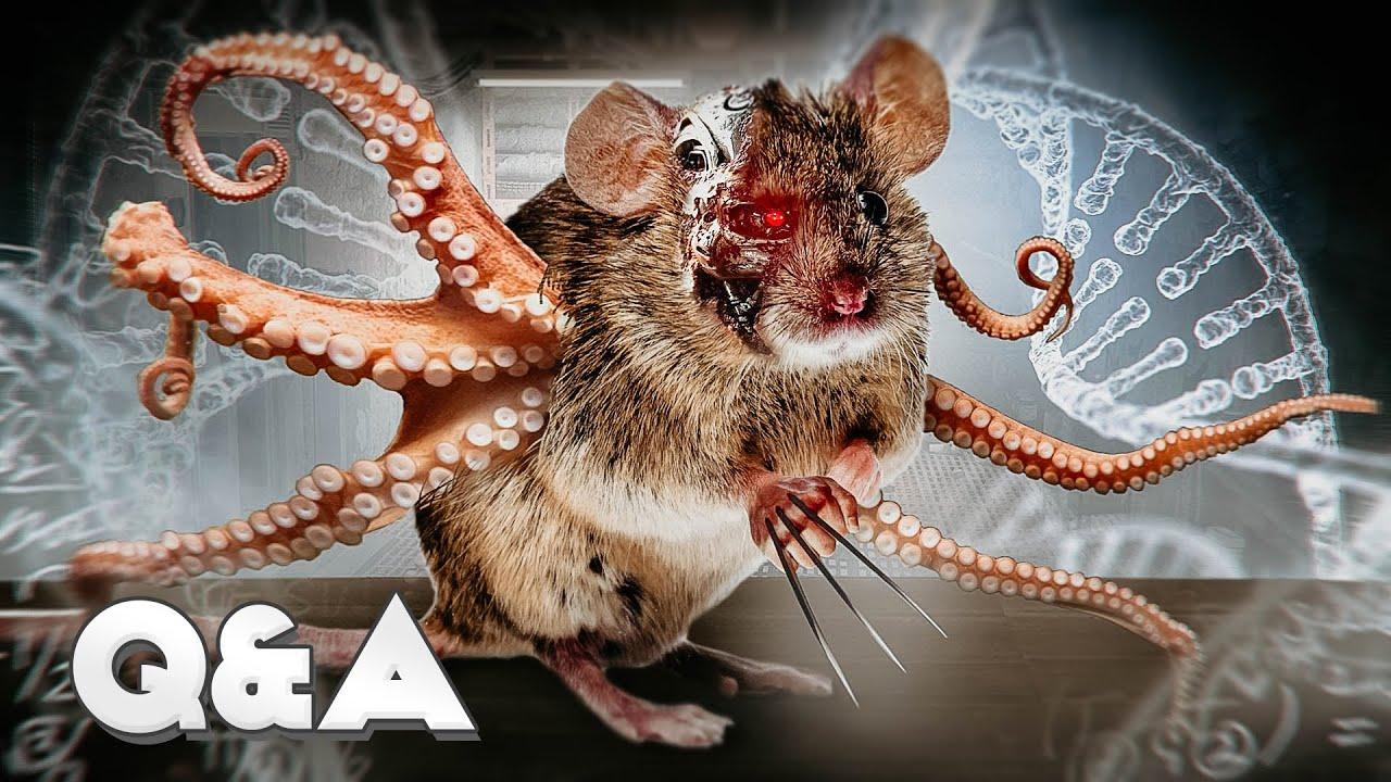 Что за кресты были на клетках? Почему мышам не колют обезболивающие? Ответы на вопросы