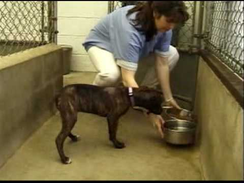 veterinary assistants and laboratory animal caretakers career profile youtube