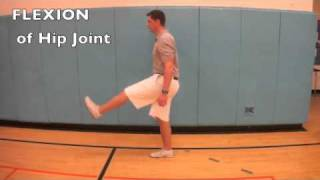 B.1.4 Compare movements of the hip joint and knee joint