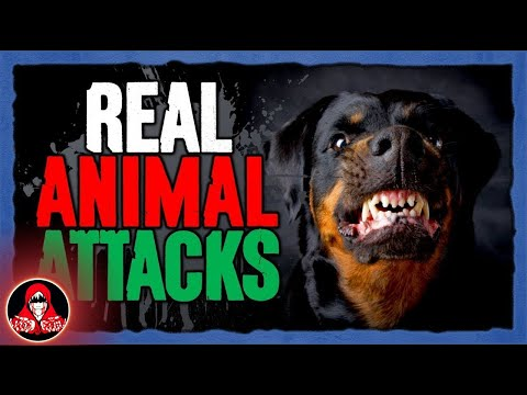 5 DISTURBING Animal Attacks