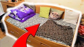 Разозлил кровать за то что на ней сплю