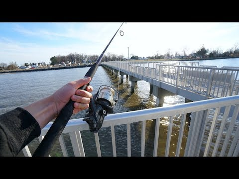 Striped Bass Fishing From A Pier!! (EASIEST WAY)