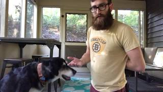 How Do I Teach My Dog To Target My Hand?