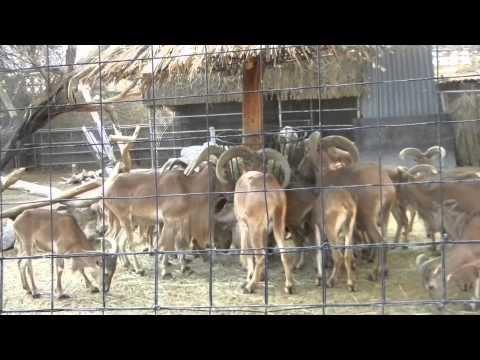 Dubai Zoo Full Coverage Youtube