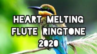 Flute Ringtone 2020 | Heart Melting Ringtone | Feel The Music Whatsapp status | Daily Dose Kerala