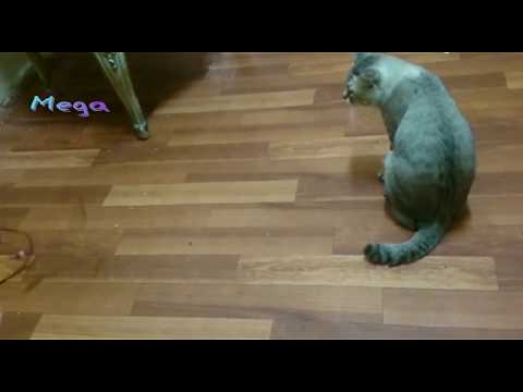 Funny Cats and Kittens Meowing Compilation