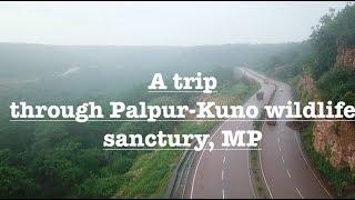A road trip through Palpur-Kuno wildlife sanctuary in rainy season